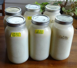 Milk from Healthyway Dairy