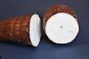 Manioc / cassava cross-section